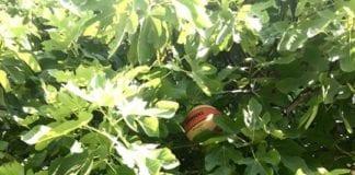 NON SOLO BASKET al Sanga Day Anche se crescono palloni sugli